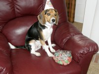 Emma first birthday