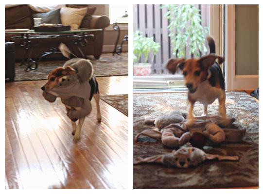 A Beagle Halloween
