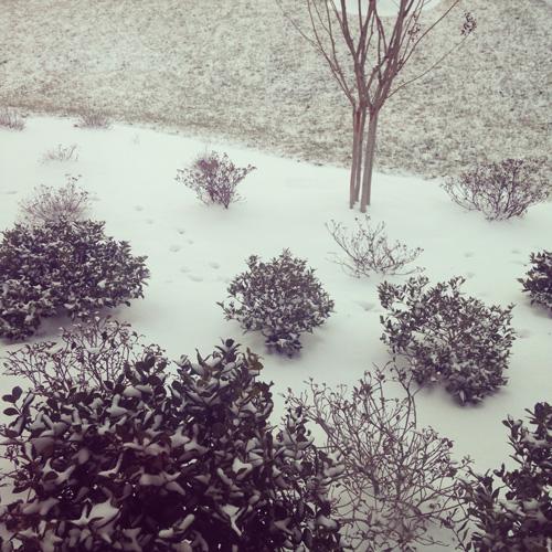 Snow | cookiemonstercooking.com