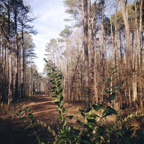 Trails in Woods | cookiemonstercooking.com