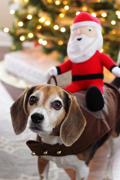 The Little Things - December 2014 | cookiemonstercooking.com