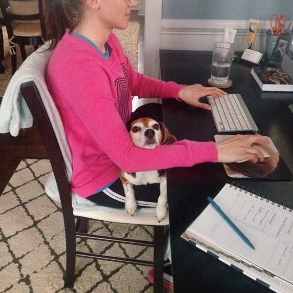 Someone working at a computer with a beagle sitting in her lap.